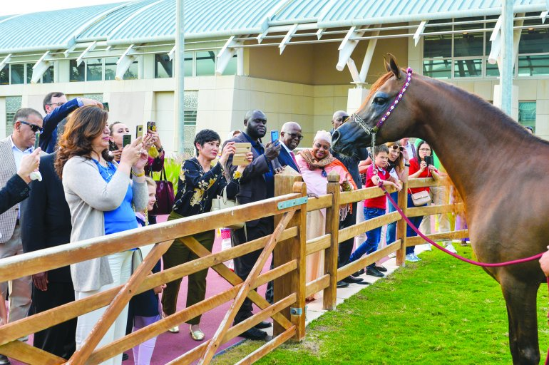 Preparations for CHI Al Shaqab come in for acclaim from Qatari Athletes
